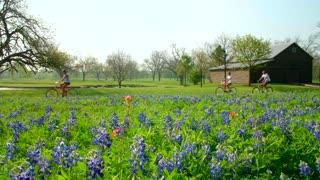 Bike Riders Pass Field of Bluebonnet Flowers