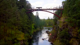 Bungee Jumping in the Middle of a Forest