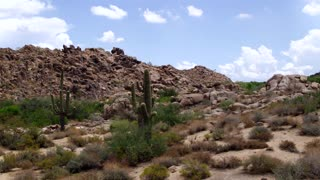 Cacti in front of Desert Rock Formation