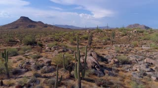 Cactus and Mountains in the Desert