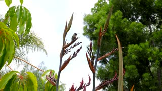 Closeup of Hummingbirds by palm trees and flowers
