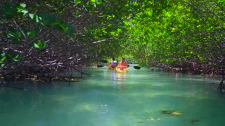 Couple Kayaks in Clear Ocean Under Tropical Trees by Aerial Drone