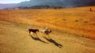 Cowboy on Horseback Travels on Dirt Path With Lassoed Horse by Aerial Drone