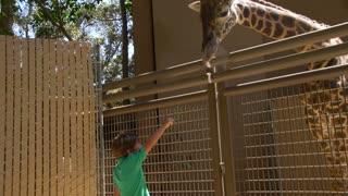 Feeding the Giraffes at the Zoo