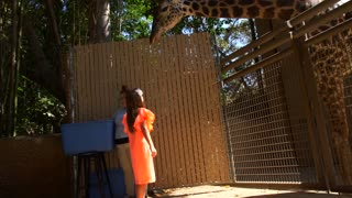 Feeding the Giraffes at the Zoo