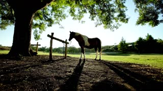 Horse Tied to Hitching Post Under a Tree