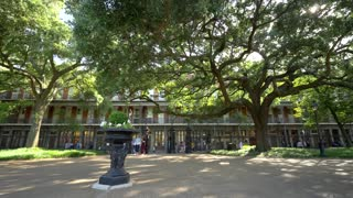 Jackson Square, Beautiful Tree and French Quarter Architecture