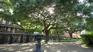 Jackson Square, Tree and French Quarter Architecture