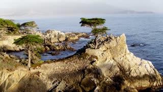 Lone Cypress at Pebble Beach