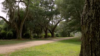Long Beautiful Dirt Driveway to Plantation House