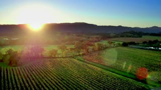 Napa Valley Landscape by Aerial Drone