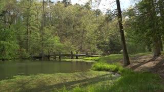 Old Bridge in Beautiful Forest Landscape, Slow Motion