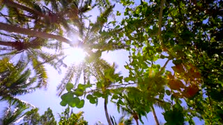 Sun Beams Shine Through Palm Tree From Above Tracking Shot