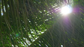 Tropical Palm Tree with Sun Flare Tracking Shot
