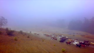 Wild Horses Running Through a Field in Fog by Aerial Drone