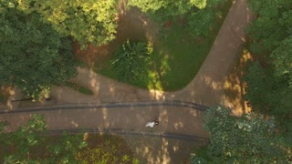 Aerial Video Newlyweds are Circling in the Dance Through the Trees 4k