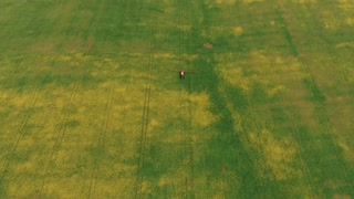 Agriculture Tractor Spraying Summer Crop Canola Field. Aerial footage