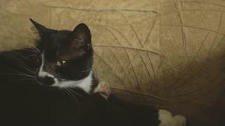 Beautiful black cat in a chair