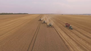 Combine harvester gathers the wheat crop in 4k video