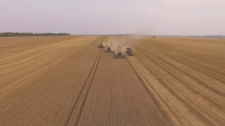 Combine Harvester Working in a Field at Sunset in 4k video