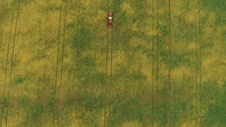 Flying Over the Field With a Canola. Agriculture Tractor Spraying Summer Crop Wheat Field. Aerial video 4k