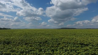 Over a Field of Sunflowers in the south, aerial panoramic view. in 4K