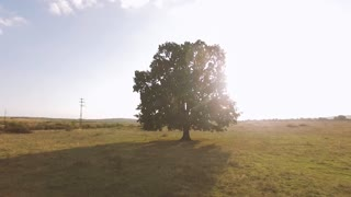 Sammer Tree backlit aerial view