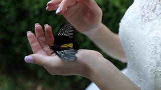 The Bride Butterfly Strokes in wedding dress