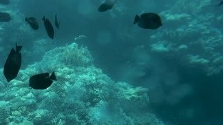Coral reef and beautiful fish. Underwater life in the ocean