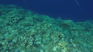 Diving underwater in Red sea in Egypt