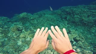 Diving underwater . Red Sea Egypt