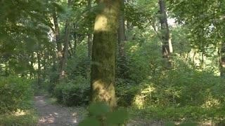Fitness Female Runner in the Woods