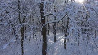 Flight Winter forest in Snow