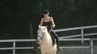 Graceful Horse. Horse Riding in the Summer Forest