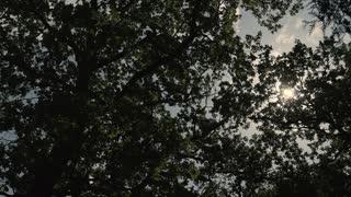Sun Light Through the Trees