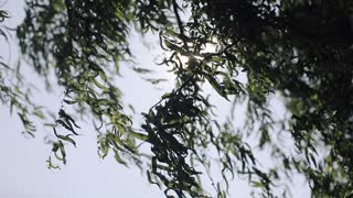 Sunbeams shining through lush green leaves on branches in tree