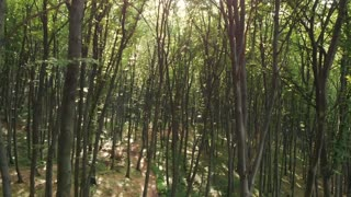 Sunlight through the trees in forest