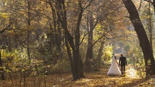 Wedding Bride And Groom Walk in a Autumn Forest. Slow motion