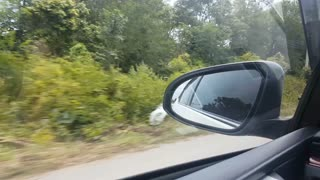 footage close-up side rear mirror of car driving very fast