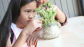 4K : Close up of Asian child holding a little green plant