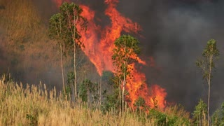 4K : Forest fire in Southeast Asia