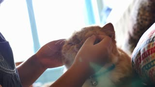 4K : Lovely Asian girl plays with her tabby Persian cat