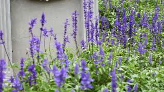 4K : Welcome sign on stone background with lavender flower, Tilt up shot