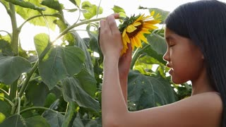 A cute Asian girl kissing sunflower in an open field with sunlight, Slow motion shot