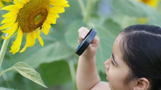 Happy Asian girl looking sunflower with magnifying glass