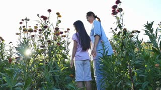 Happy Asian girl walking with her mother in the flower field with sunlight, Slow motion shot