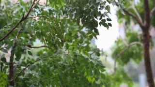 Heavy rain shaking the tree