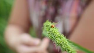 Little Asian girl looking ladybird