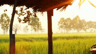 Little farm hut in rice field with sun light and flare, Pan shot