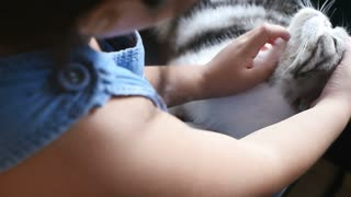 Lovely Asian girl plays with her tabby Scottish fold, cat, Slow motion shot